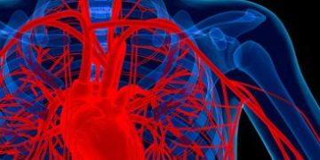 blood vessels h 1 e1517169186159 360x180 - Учёные научились восстанавливать кровеносные сосуды