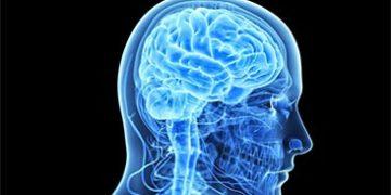 depression changes brain h 1 360x180 - Долговременная депрессия меняет физиологию мозга