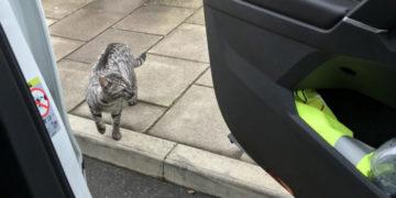 dz7mwgqwsaevrfg 700x366 360x180 - Мужчина ехал домой на машине и случайно встретил своего кота. Реакция питомца бесценна