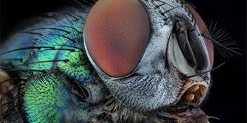 extraordinary photo tiny creatures h 5 360x180 - Экстраординарная макросъемка крошечных существ