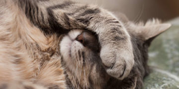 fotolia 60004772 subscription monthly m 360x180 - 23 удивительных факта о котах, которые заставят вас замурчать