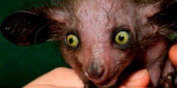 frightening animals h 5 e1517171428465 360x180 - Пугающие животные из фильмов ужасов и ночных кошмаров