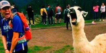 funny frightning meeting h 1 e1517172406726 360x180 - Забавные и пугающие встречи человека и животного
