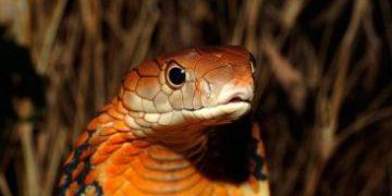 most poisonous animals h 17 e1517172848650 360x180 - Самые ядовитые животные