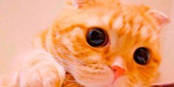 muta cat shreck h 7 e1517172239869 360x180 - Мута — «Кот в сапогах» в реальной жизни