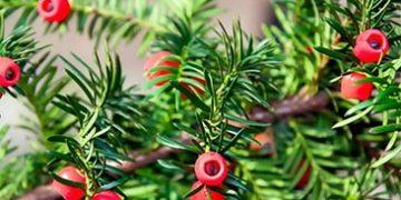 plants affect human h 9 360x180 - Как растения влияют на здоровье человека, любовь и настроение