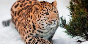 rareanimals verge extinction h 9 e1517172916905 360x180 - ТОП-10 Редких животных на грани вымирания