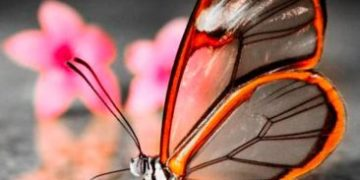 rating butterfly h 3 e1517171474544 360x180 - ТОП-10 бабочек поразительной красоты
