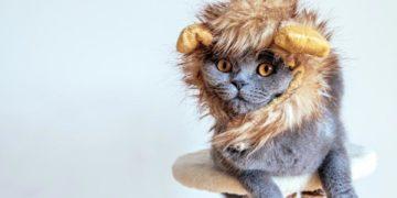 things cat hates 5 360x180 - 7 вещей, за которые ваш кот вас ненавидит