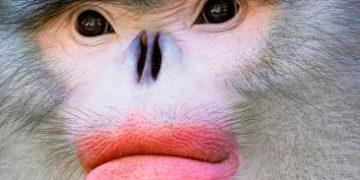 timflach animals brink extinction h 5 e1517173116661 360x180 - Животные на грани исчезновения
