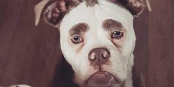 1 10 700x366 360x180 - Эта собачка выглядит так, будто она давно разочаровалась в жизни, но всё дело в её бровях