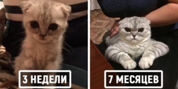1 30 700x366 360x180 - Пользователи сети делятся детскими и взрослыми фотками своих котов, и они наглядно демонстрируют, как маленькие милашки становятся пушистыми лордами