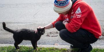 1 36 700x366 360x180 - «Кладбище домашних животных» в реальном мире: парень похоронил кота, а утром тот вернулся домой