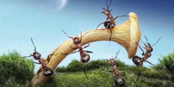 1 40 700x366 360x180 - Фотограф сделал серию макро-снимков о жизни муравьёв, которая оказалась куда интереснее, чем кажется на первый взгляд