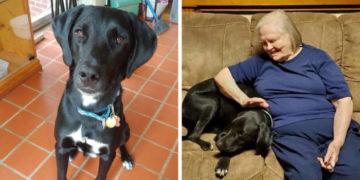 1 9 700x366 360x180 - Бабушка была против пса, которого приютила внучка. Но он доказал свою преданность и спас ей жизнь
