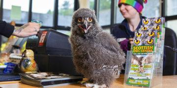 12 5 360x180 - Этот птенец родился в шотландском совином Центре и теперь сидит на ресепшене. Его фотки просто чума!