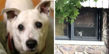 2 18 700x366 360x180 - Мужчина поделился трогательными фото своего пса, который каждый день ждал его у окна. Целых 11 лет