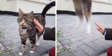2 20 700x366 360x180 - 17 случаев, когда люди использовали свою фотокамеру во имя самого святого — котов