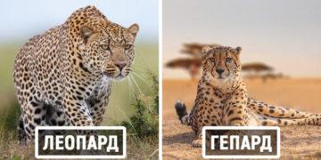 2 21 700x366 1 360x180 - Тест: Сможете ли вы правильно назвать животных, которых постоянно путают?
