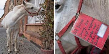 2 21 700x366 360x180 - Во Франкфурте живёт лошадь, которая уже 14 лет каждое утро выходит на прогулку в полном одиночестве