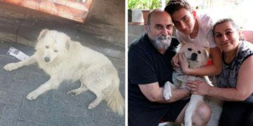 3 10 700x366 360x180 - Семья встретила в другом городе своего пропавшего пса. От видео их встречи зашкалят все мимиметры