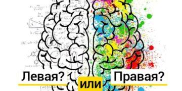 35bd1c19 848c 44b2 8768 a5a16971371e 560 420 360x180 - Тест: правая или левая, какая часть вашего мозга управляет вашими действиями?