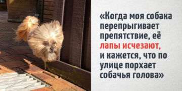 4 12 700x366 360x180 - 18 крутых фотографий собак, которые вкупе с комментариями их владельцев делают интернет ещё прекраснее
