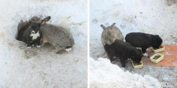 4 14 700x366 360x180 - Этот ушастый товарищ доказал, что кролик — это не только ценный мех, но и героический спасатель. Для щенков