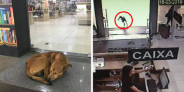 5 19 700x366 360x180 - В сети появилось видео, на котором пёс решил утащить книгу из книжного магазина. Неизвестно, как такая идея пришла в его голову, но его жизнь после этого круто изменилась