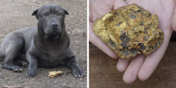 6 3 700x366 360x180 - На прогулке с собакой девочка пнула камень, а он оказался не так прост. Теперь её семья богата