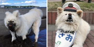 7 2 700x366 360x180 - В Японии высокою должность отдали…псу. И это не шутка, а вполне обоснованное решение