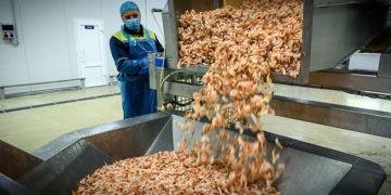 af76993be71142e35554535b655c4705 800x400 360x180 - Как производят легендарные белорусские креветки