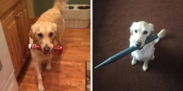 fayarsopmorl 700x366 360x180 - У этой собаки появилась привычка приносить хозяину всё, что она видит. И у неё на это есть веская, хоть и весьма эгоистичная причина
