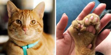 fyvayvfayv 700x366 360x180 - У этого кота есть дополнительный набор пальцев, но это не мешает ему быть любимым и очаровательным