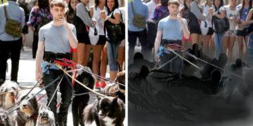 jcukcjukcj 700x366 360x180 - Дэниэл Рэдклифф на съёмках фильма вышел погулять с собаками и стал героем весёлой битвы фотошоперов