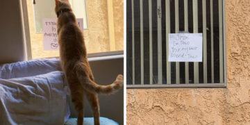 kuceuceuke 700x366 360x180 - Кот нашёл себе нового друга, но они не могли познакомиться поближе. Тогда хозяйка решила им помочь