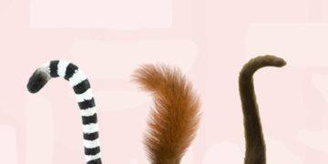 lemur3 700x366 360x180 - Тест: Угадайте животное по его хвосту