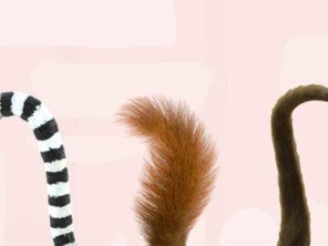 lemur3 700x366 360x270 - Тест: Угадайте животное по его хвосту