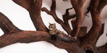 mschyamschm 700x366 360x180 - Мужчина создал в квартире друга огромное дерево. Кошачье сердечко было покорено моментально!