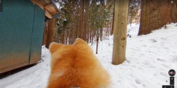 pic pic4 2 700x366 360x180 - На панорамах Google появилась возможность побродить по виртуальным картам, глядя на город глазами собаки. Вид непривычный, но интересный!