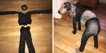 rparvrrpar 700x366 360x180 - Девушка заказала в интернет-магазине сетчатый костюм своего размера, но он подошёл только её собаке