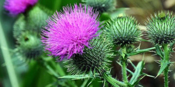 universal template1 700x366 360x180 - Пупавка, козульник и чубушник: знаете ли вы, как называются цветы, которые видели тысячу раз?