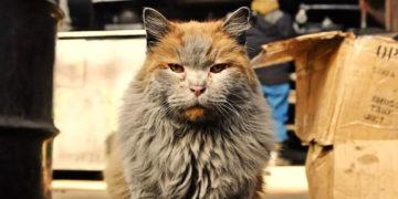 vapvypa 700x366 360x180 - Эта кошка выглядит так, будто она валялась в пыли и ремонтировала поезда. Но это её природный цвет!