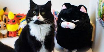 yvapvyapavp 700x366 360x180 - Хозяйка принесла коту его плюшевую копию. Сначала он был в шоке, но потом его сердечко растаяло