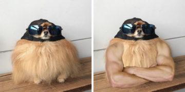 1 21 700x366 360x180 - Пёс в солнечных очках выглядел настолько круто, что попал в битву фотошоперов и стал ещё круче