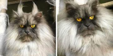 10 700x366 360x180 - 20 фото кота Джуно, который шокирует своей шевелюрой и «осуждает всё вокруг с 2012 года»