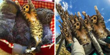 6 17 700x366 360x180 - У растянувшегося котика в неожиданном месте образовалась обезьянка. Фотошоп-веселья было не избежать