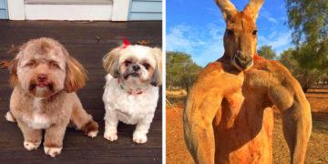7 1 700x366 360x180 - 16 удивительных фотографий животных с явными человеческими чертами