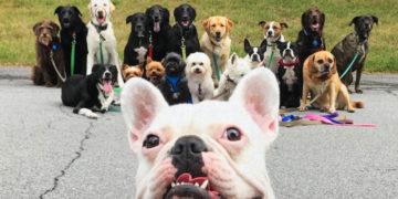 avavvav 700x366 360x180 - Нью-Йоркская организация по выгулу собак делает крутейшие псовые селфи, и их Инстаграм фееричен!