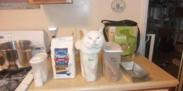 catlogic02 360x180 - 15 котов, которые плевать хотели на вашу логику